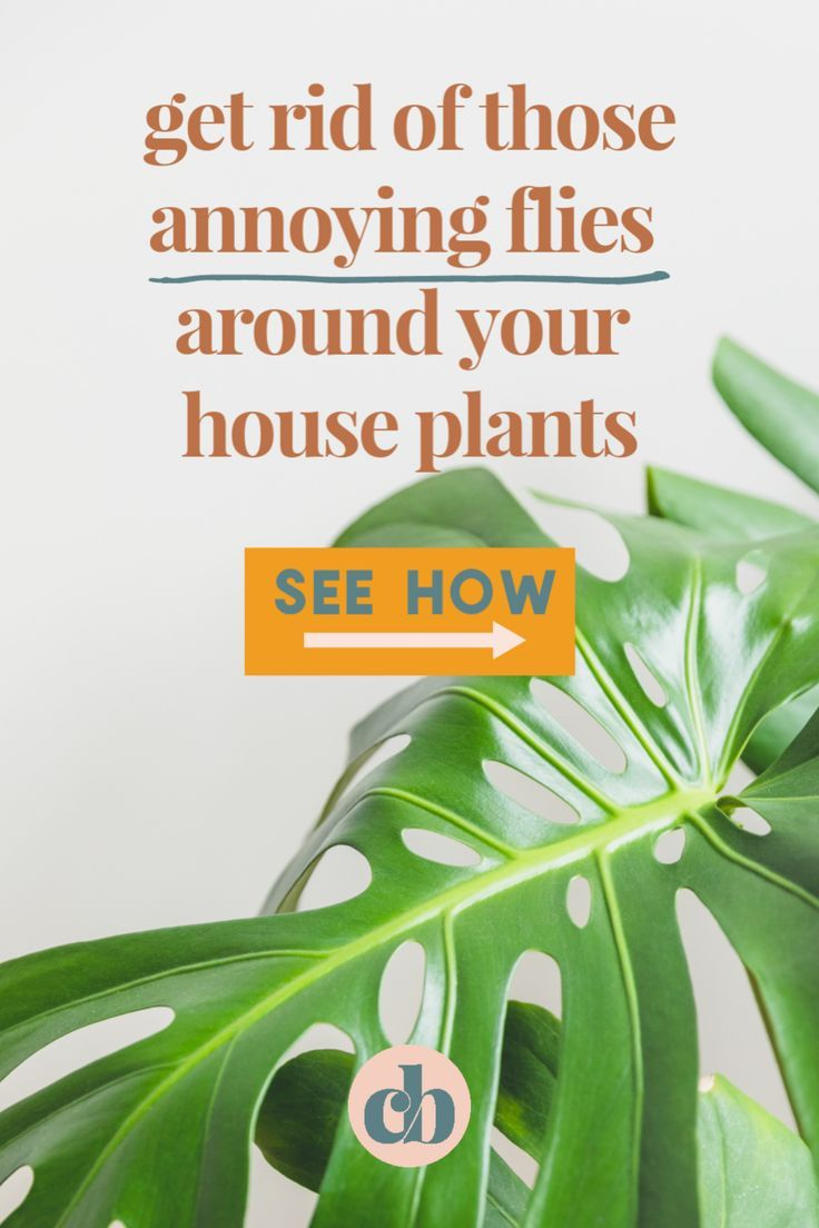 How To Get Rid Of Fungus On Palm Tree