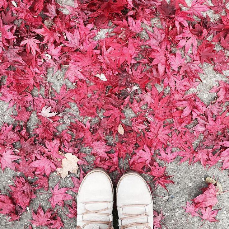 Noch schnell den roten Blätterteppich fotografiert bevor hier auch noch Schnee fällt. Oh bin froh mir die gefütterten Schuhe für die vielen Spaziergänge geholt zu haben. Bisher hatte ich dieses Jahr noch keine kalten Füße  Aber Hände werden am Kinderwagen ganz schön kalt. Brr. Gibt es da eine hübsche Lösung?  _____________________________________________  #fwis #tamaris #fall #autumn #herbst2016 #herbst #