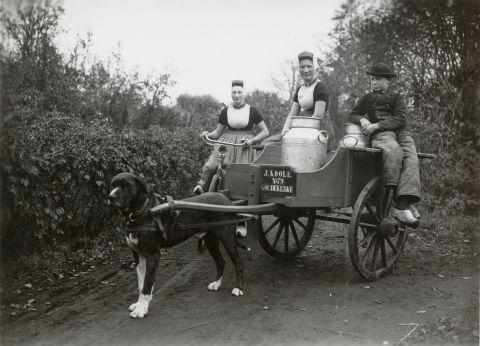 Twee vrouwen en jongen uit Koudekerke met hondenkar. Alledrie zijn ze gekleed in Walcherse streekdracht en dragen de daagse dracht. Op de hondenkar staan drie melkbussen. Gezien het opschrift is de hondenkar eigendom van J.Koole te Koudekerke. Aan de fiets is een carbidlantaarn bevestigd. 1918-1941 vanAgtmaal #Zeeland #Walcheren