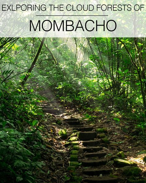 Spend the day in the cloud forest exploring Mombacho's lush peaks and craters, climbing tiny stone steps and crossing moss covered bridges through the trees with howler monkeys calling eerily close by. And all for under $6.