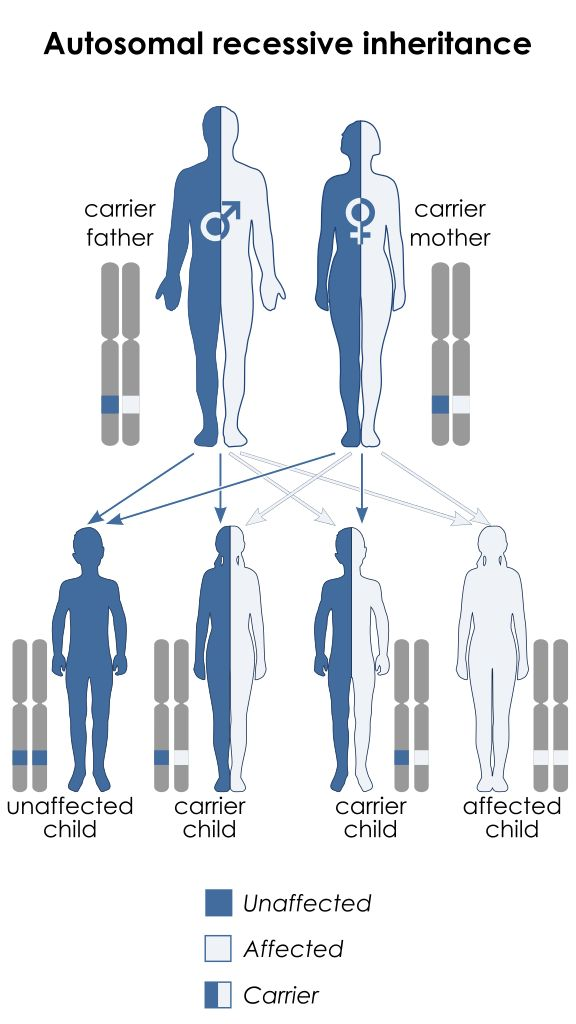 Spinal muscular atrophy has an autosomal recessive pattern of inheritance.
