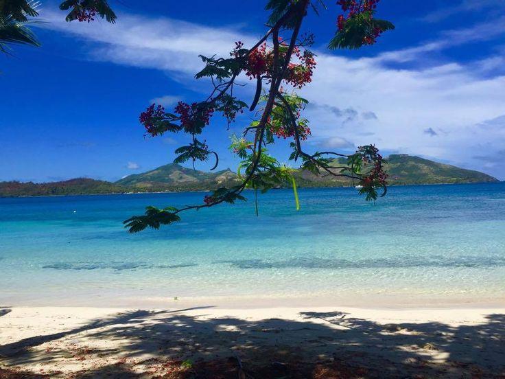 116 best images about fiji islands on pinterest azure. Black Bedroom Furniture Sets. Home Design Ideas