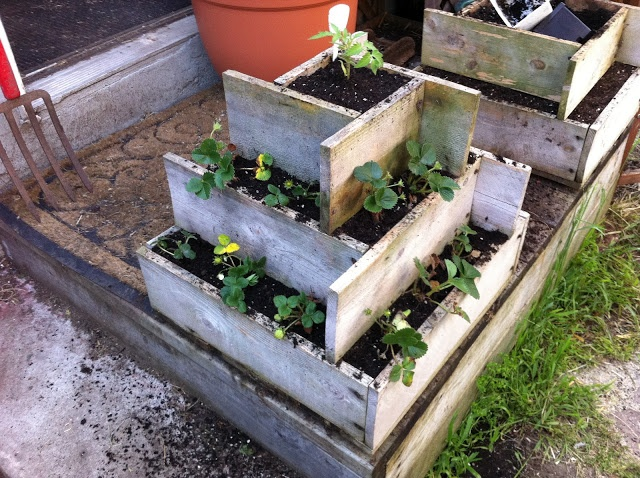 Strawberry planter- seems really easy to build! I'm totally doing this.