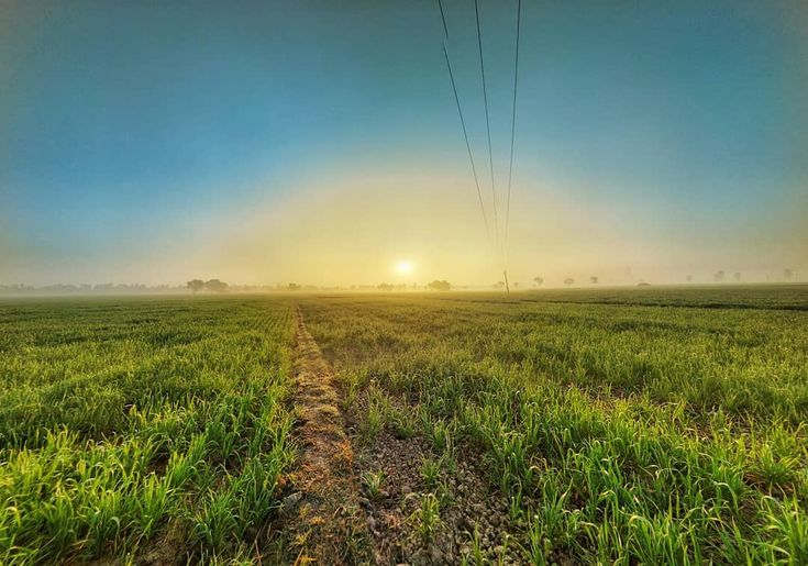 Good Morning sunrise at wheat field . . . . . #indianfood #indiapics #india#bibs #goodmorningpost #farmhousestyle #farm #farmhouse #wheat #field #sunrise #photo #landscaping #sunrise #landscape #bagpacker #travellers #travelphotography