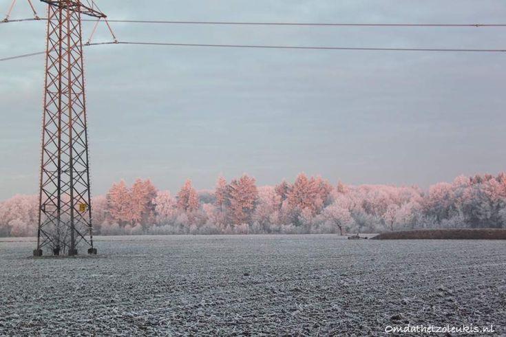 in het veld, bevroren weiland, witte bomen, roze bomen, elektriciteitsmast, zonsopkomst