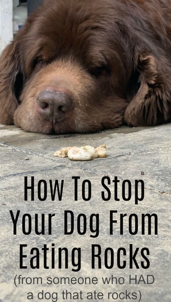 How To Try And Stop Your Dog From Eating Rocks From Someone That