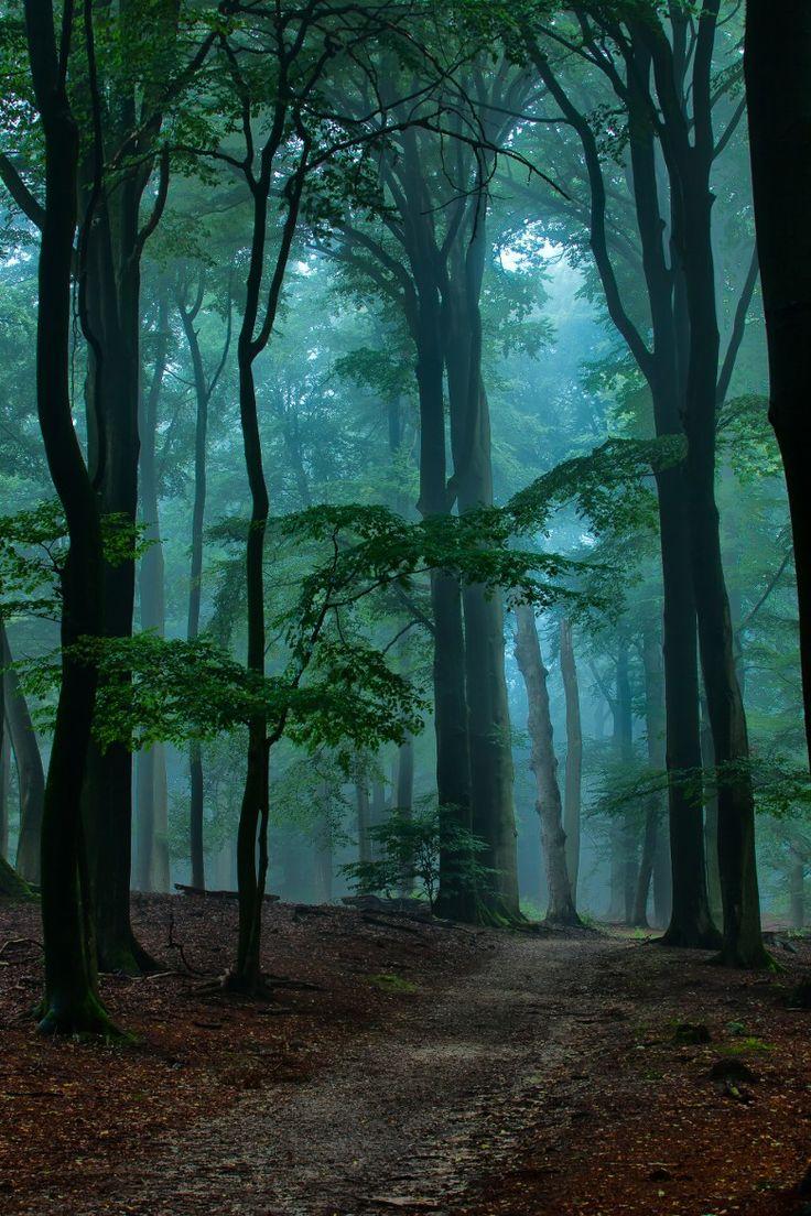 Blue mist || Ruud van Putten