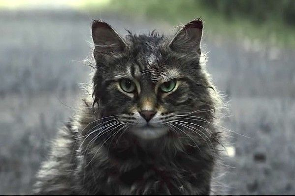 5 Controversial Movies On Netflix You Should Watch At Your Own Risk Pet Sematary Pets Cats