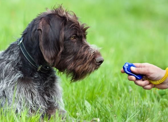 Dog Shaping You Can Use This Dog Training Method In Almost Any