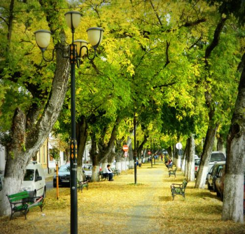 Targu Mures has the most romantic boulevard in Europe, according...