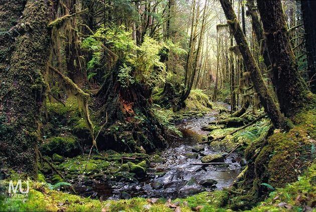Rainforests of Haida Gwaii