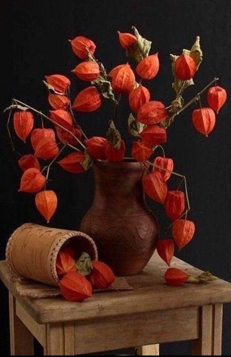 ваза с физалисами картинки гараже