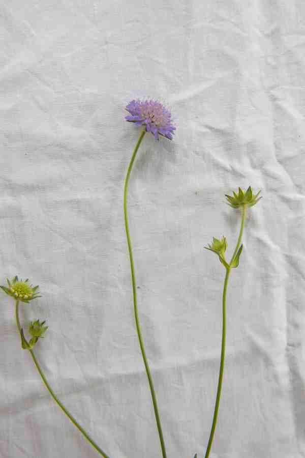 """From the series """"Finding a new flora"""" photo Sophia Callmer"""
