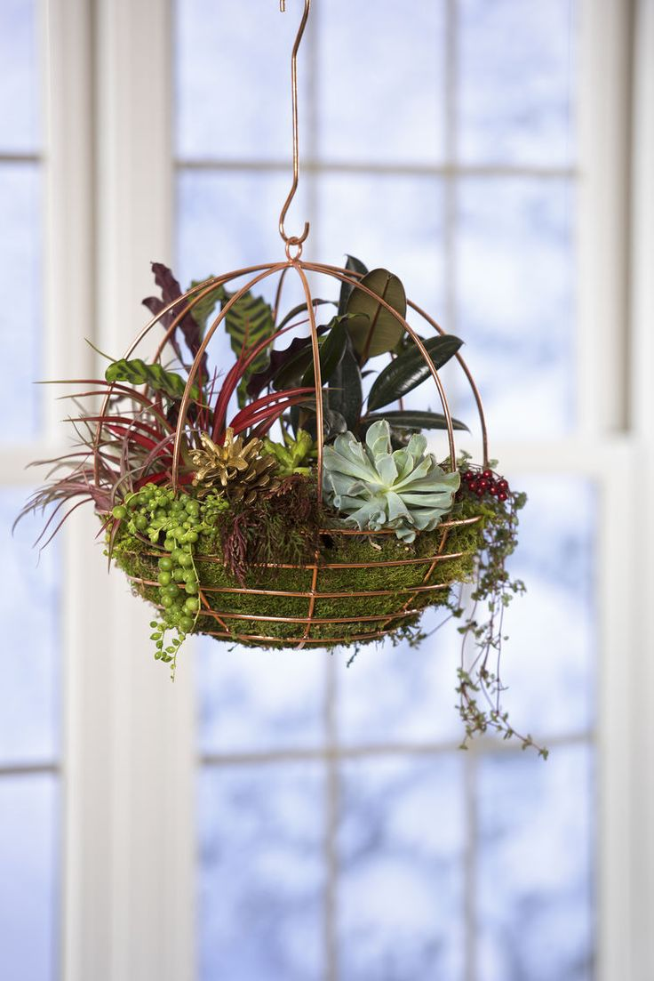 37 best images about terrariums succulents on pinterest terrarium ideas growing succulents. Black Bedroom Furniture Sets. Home Design Ideas