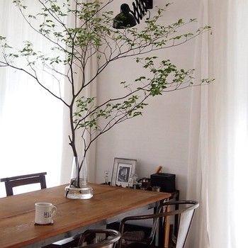 大きい24cmのフローラ。 圧倒的な存在感を放つ植物。花だけでなく、大胆に枝を飾ってみるのもいいかも。