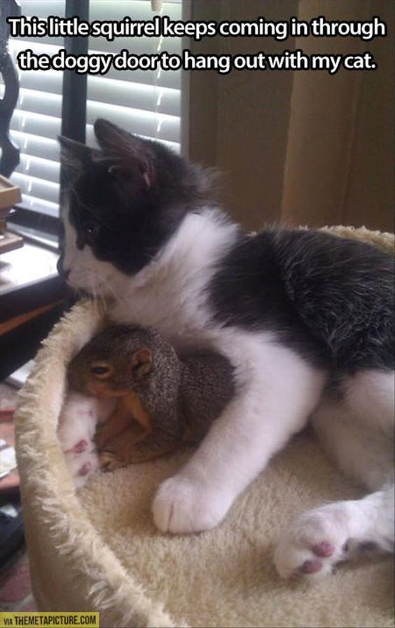 A la ardilla le gusta salir con mi gato   Animales torpes