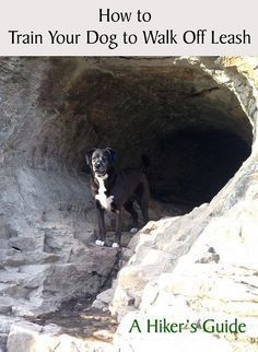 Keep your dog safe while he's off the leash.  Enjoy your time on the trail together!