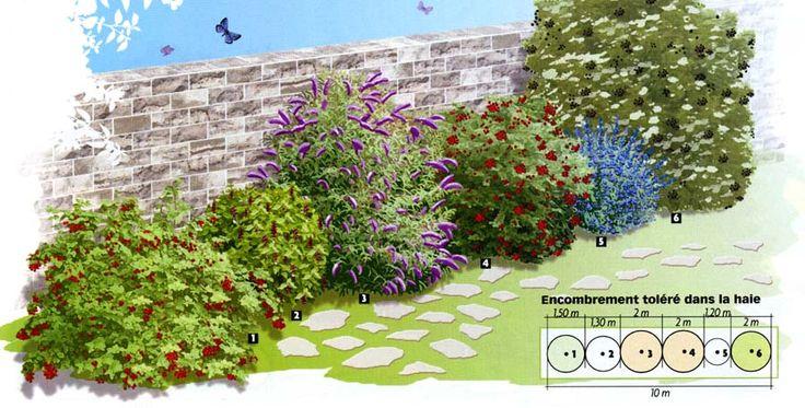 Haie pour oiseaux et papillons // 1-Viburnum opulus. Belles fleurs en bouquets plats, blanches, dès mai-juin, suivies de grappes de fruits rouge vif tout l'automne, appétissantes pour les oiseaux. Croissance rapide. Tous sols, même humides. Taille inutile. H : 2,50 m // 2-Leycesteria formosana. Arbuste caduc attirant oiseaux et faisans par ses grappes pendantes de fruits, au goût de caramel, en fin d'été. Bois vert décoratif. Port souple et croissance rapide. Tous sols. Rabattez en fin…