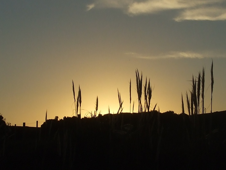 Sunset: Awhitu Peninsula