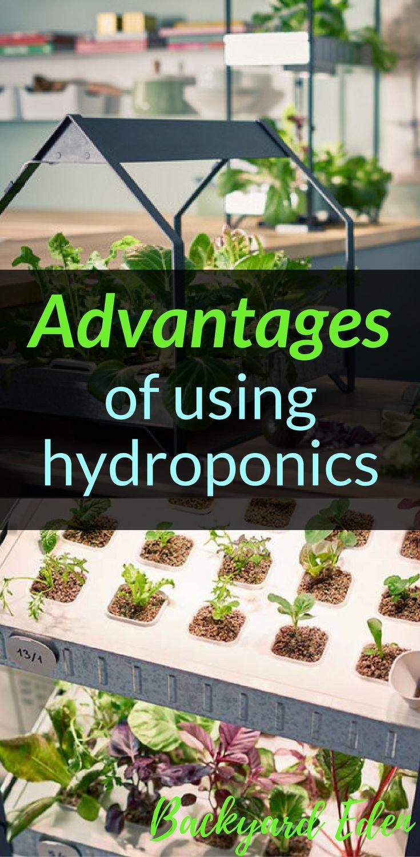 Advantages of using hydroponics |  Hydroponics | DIY Hydroponics | Hydroponics for beginners | Indoor Hydroponics | Hydroponic Wall | Hydroponic System | Hydroponic Gardening | Homemade Hydroponic systems | Hydroponic Nutrients | Kratky Hydroponics | Greenhouse Hydroponics | Hydroponics Design | Hydroponic Vegetables | Backyard-Eden.com #hydroponicsdiy