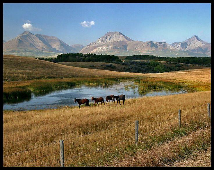Ranch Country - Pincher Creek.