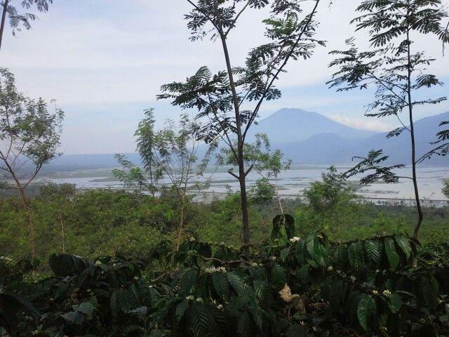 scenery of rowo pening in Ambarawa