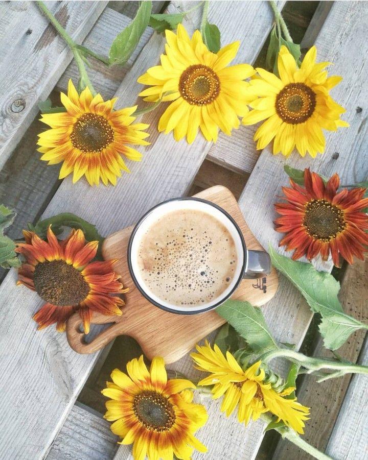 Cafe Girassol Coffee Breakfast Coffee Photography Coffee Time