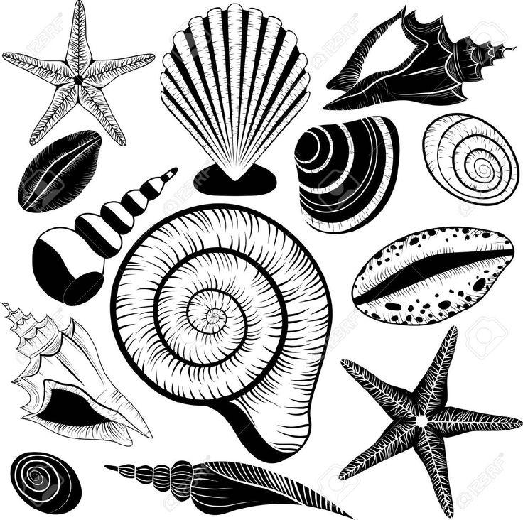 25 unique Starfish clipart ideas on Pinterest  Seahorse art