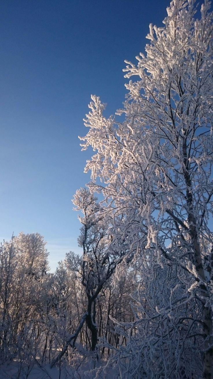 Snowy sweden