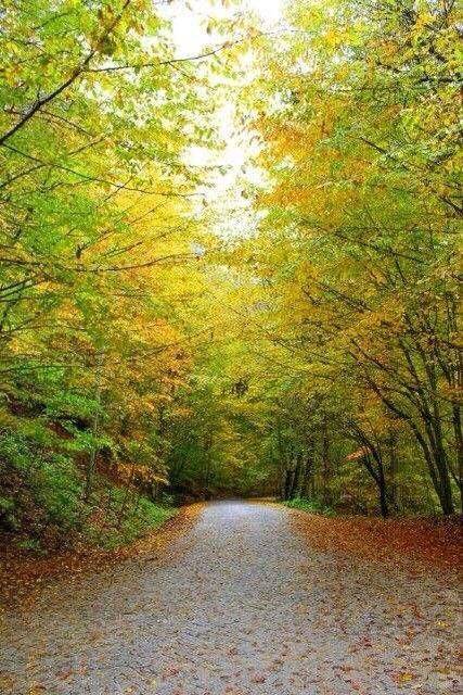 SevenLakes Forest ! @holidayturkey