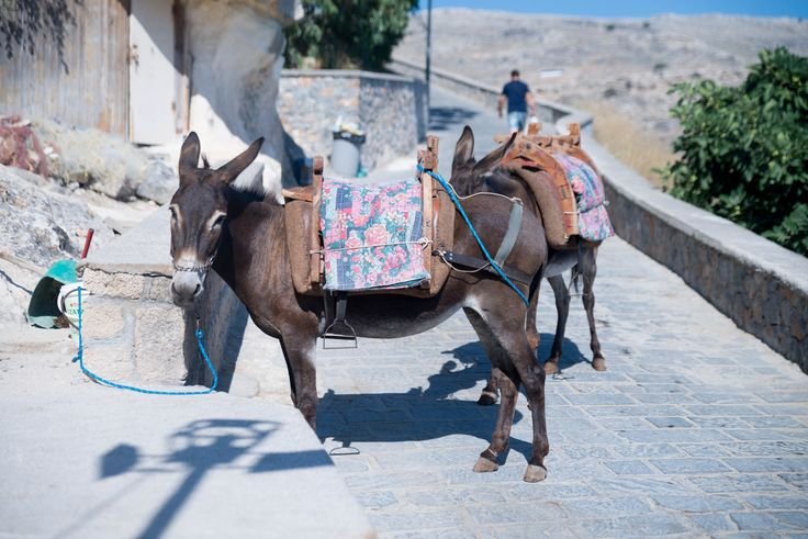 Traveler Nick: Lindos Taxi