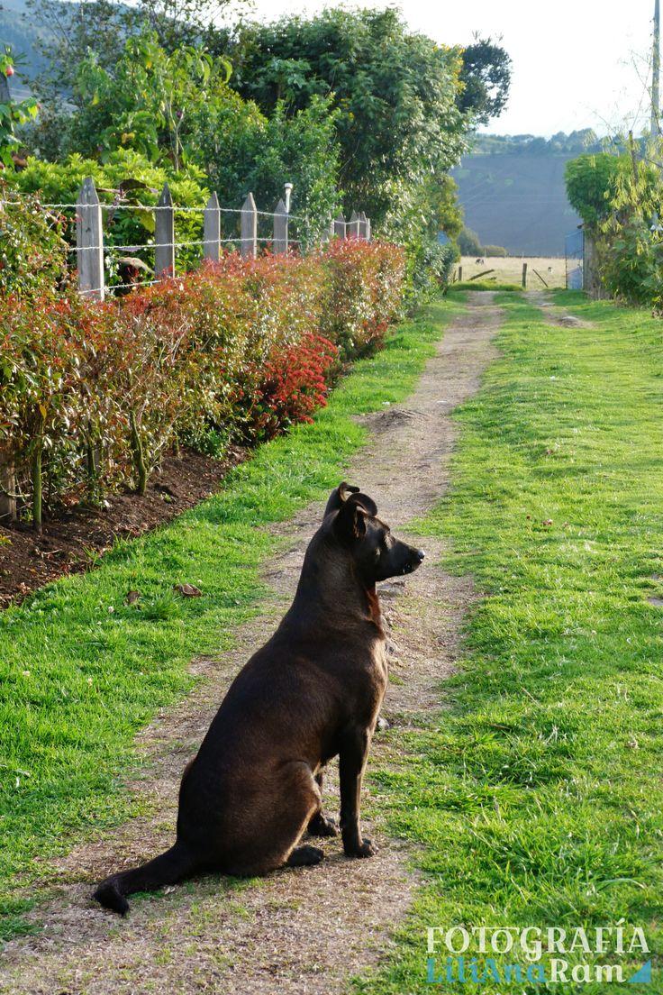Perro negro, black dog.