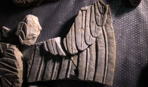 A second part of the wings of a Sphinx