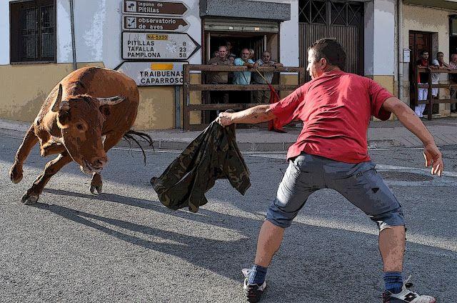 Santacara: Vacas Arriazu - Fiestas de Santa Eufemia Año 2015