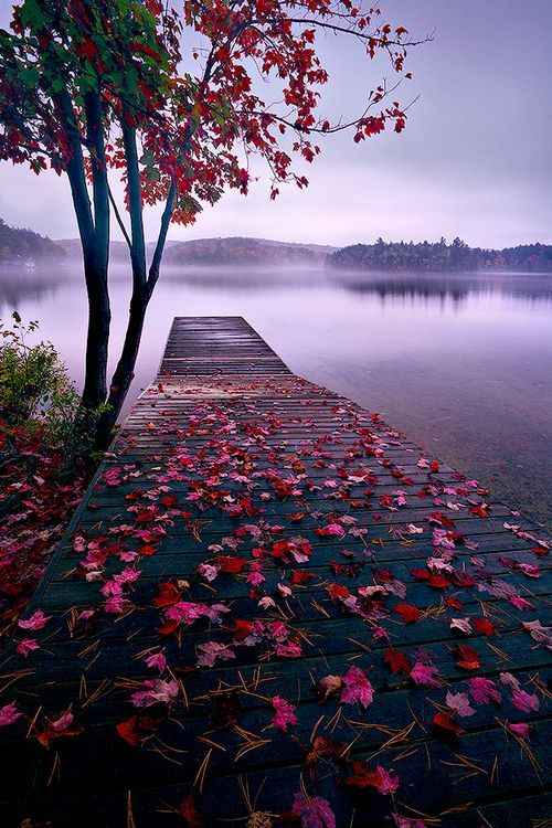Lake Dock, Thousand Islands, Canada-  The light purple and blues of the hills and water, and sky in the background create a cool tone to the image. The flowers complement it well and keeps it very calm.