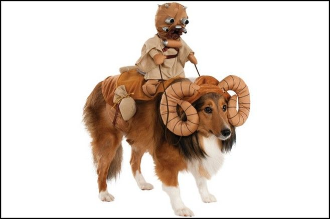 Adorable Large Dog Halloween Costumes Ideas & Big Brown Dog With ...
