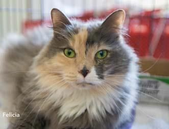 86 best images about diluted tortie cat on Pinterest ...   331 x 253 jpeg 12kB