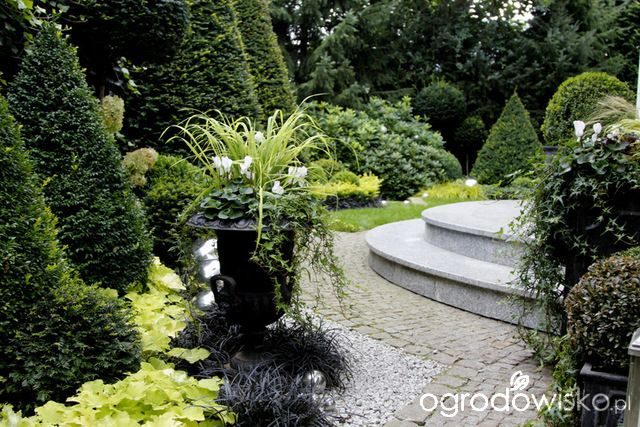 Ogród nie tylko bukszpanowy - część III - strona 49 - Forum ogrodnicze - Ogrodowisko