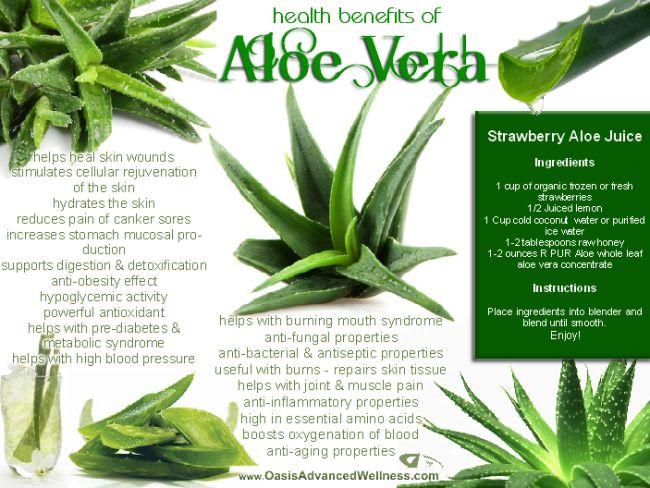 Health Benefits of Aloe Vera, with recipe for Strawberry-Aloe Vera juice