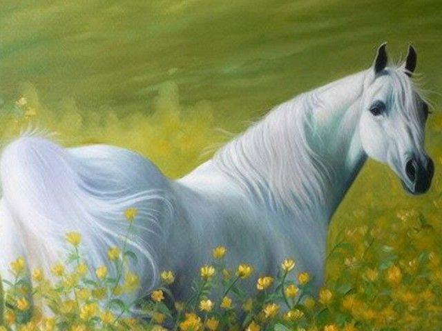 تفسير رؤية الحصان الابيض في المنام او الحلم ابن سيرين الحصان الحصان الابيض الحصان الابيض للحامل Horses White Horses Animals