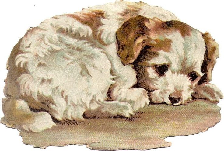 Oblaten Glanzbild scrap die cut chromo Hund 11,5 cm dog chien: