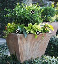 """Super Easy Shade Container Garden"" for porch or landscaping....wonder if I could pot the misplaced boxwoods in the front yard."