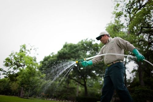 What is the Best Lawn Fertilizer Schedule?