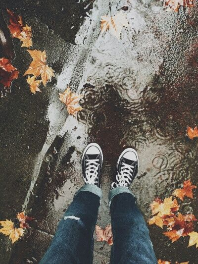 leaves, autumn, and rain image