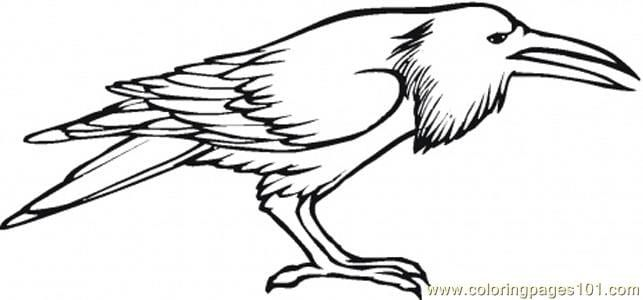 Flying Crow Coloring Pages Bird Coloring Pages Coloring Pages