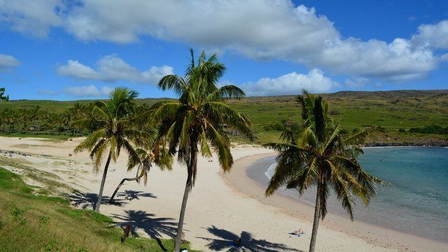 Palmeras de Anakena-Isla-de-Pascua