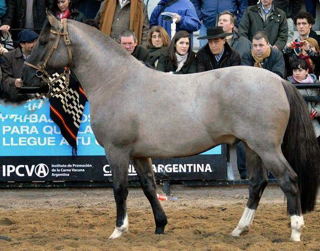 Caballos Criollos - todo sobre el caballo criollo -: 01/15/15
