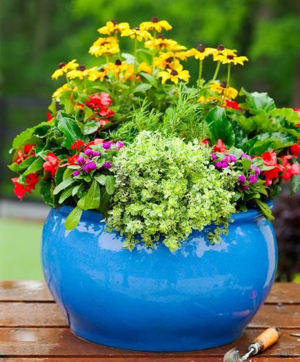 952 best images about Container Gardening on Pinterest