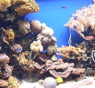 Ocean Unit Study Lesson Plan