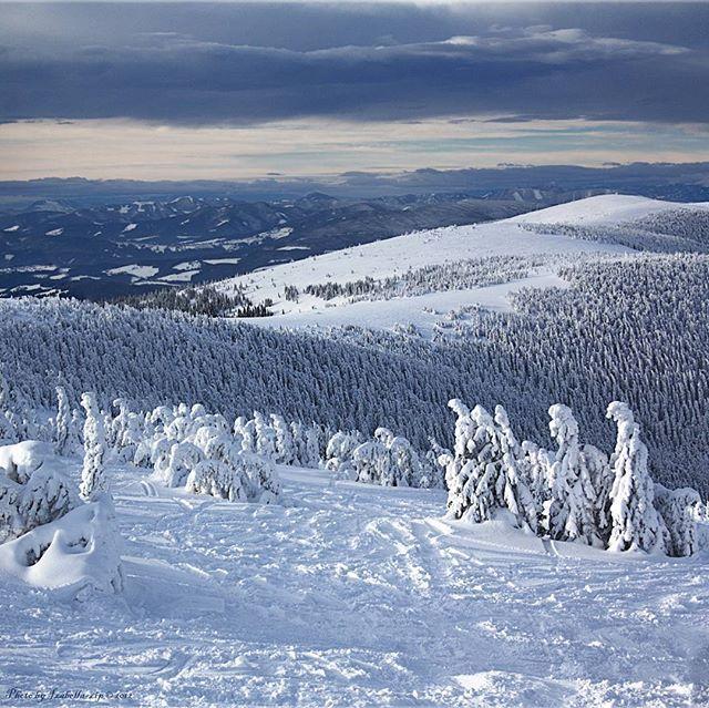 Горнолыжные трассы в Австрии проходят по очень красивым местам. Успевают ли лыжники увидеть это? Или проносятся мимо как вихрь... #фотоизабеллазубкова #лес #австрия #зима #лыжи #горы #природа #пейзаж #путешествия #landscape #nature #travel #scenery #beautiful #view #scenic #tourism #natural #environment #land #forest #mountain #winter #natgeo #izabellazip #фотограф